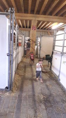 Leon fleißig im Stall