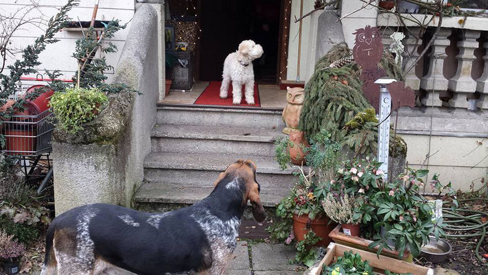 Vorne der Hausherr Hugo. Unser Henry guckt sich auf der Treppe um
