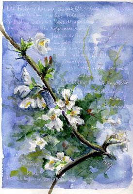 Baumblüte mit Frühlingslied, Aquarell, 20 x 30 cm