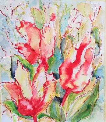 Tulpen, Rohrfeder, Aquarell, ca 25 x 35 cm