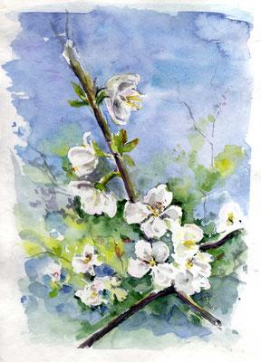 Baumblüte, Aquarell, 20 30 cm