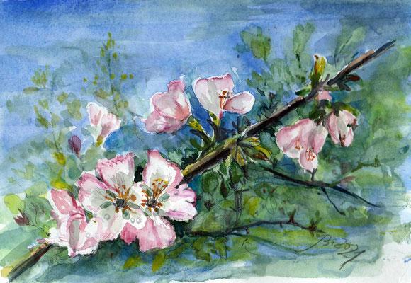 Apfelblüte, Aquarell, 21 x 15 cm