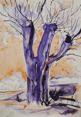 Weiden II, Aquarell, Rohrfeder, 40 x 30 cm