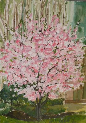 Wildkirsche, Öl, 30 x 40 cm