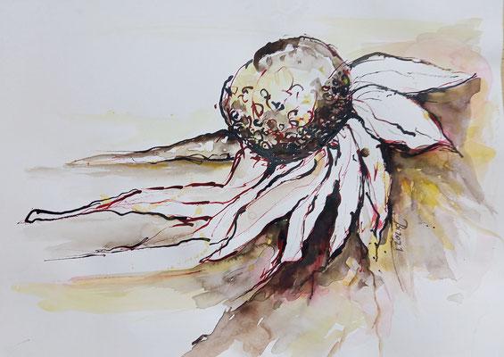 Sonnenblume, Rohrfeder, laviert, 40 x 30 cm