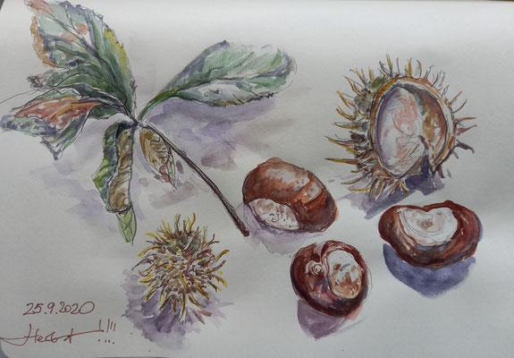 Kastanien, Studie, Aquarell, 21 x 15 cm