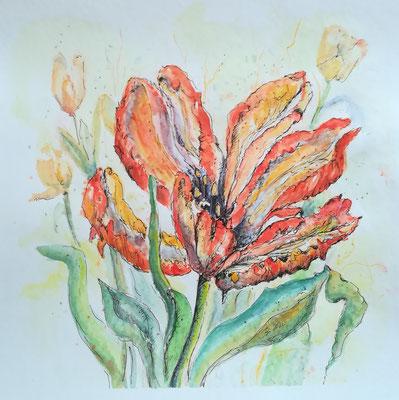 Tulpe, Aquarell, Feder, 40 x 40 cm