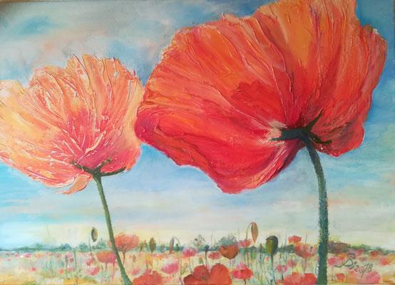 Mohnblumen, Öl, 70 x 50 cm
