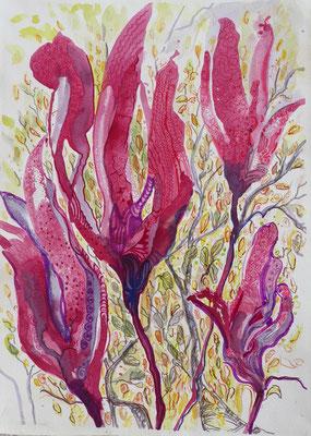 Magnolien, Aquarell, Stifte, 3o x 40 cm