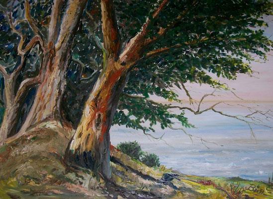 Bäume - Öl - 70x90