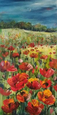 Mohnblumenwiese bei Markgrafpieske, Öl, 50 x 100 cm