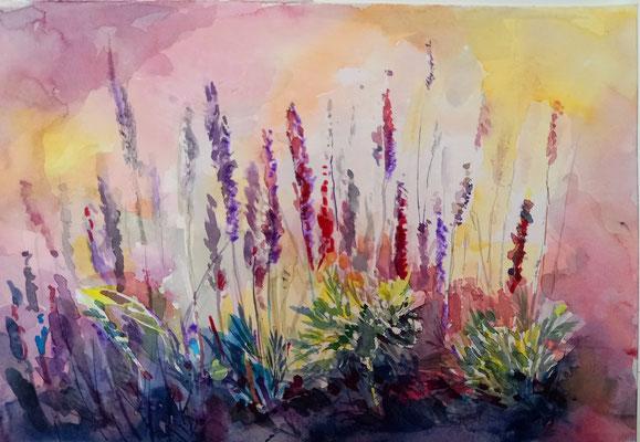 Lavendelfeld, Aquarell, 30 x 20 cm