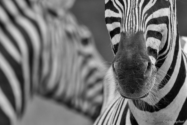 Bei mehreren Tieren bietet es sich an, ein bisschen mit der Bildgestaltung zu spielen.