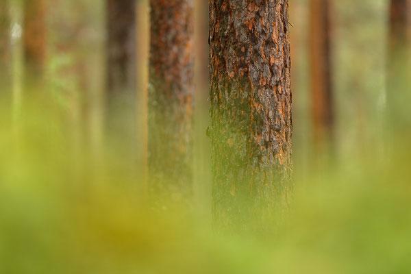 Bei Nieselregen bleibt man am sinnvollsten im Wald und fotografiert dort.