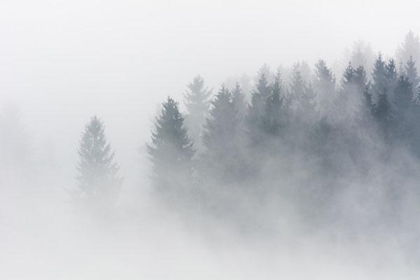 Nebelstimmung in der Rhön.