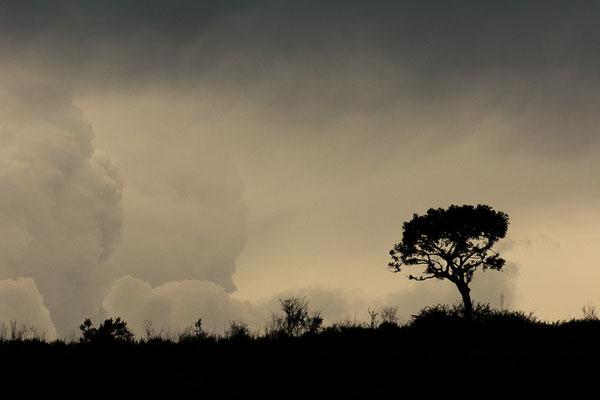 Die Gewitterstimmungen in Südafrika waren einfach magisch.