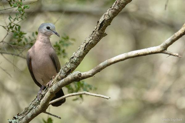 Im Bird Hide lässt sich auch mal ein Täubchen blicken