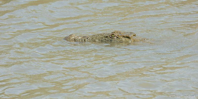 In der Mittagshitze lässt sich auch einmal ein Krokodil blicken.
