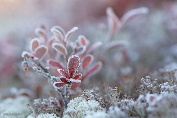 Am frühen Morgen ist der Boden noch mit Frost überzogen