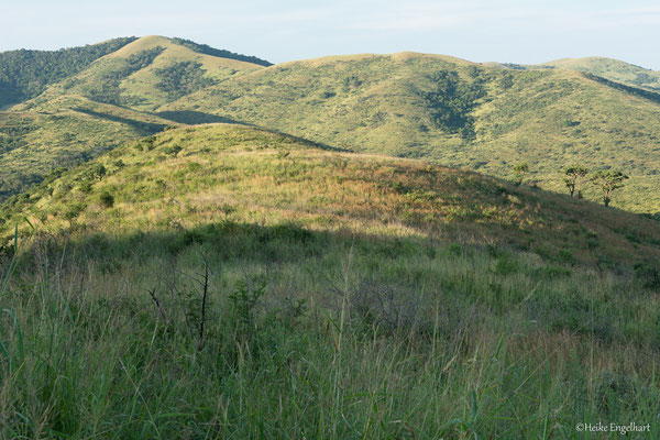 Die wunderschön hügelige Landschaft des Hluhluwe-Imfolozi-Parks