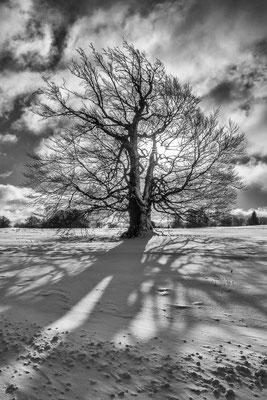 Schnee, Baum, Sonne, Schatten und Wolken. Rezept für eine schöne Schwarz-Weiß-Umsetzung.