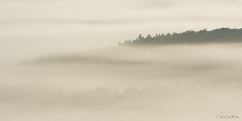 Nebeldetails, Pfälzer Wald
