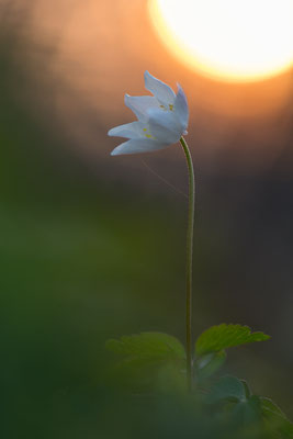 Die Abendsonne lässt sich vielfältig ins Bild einbinden.