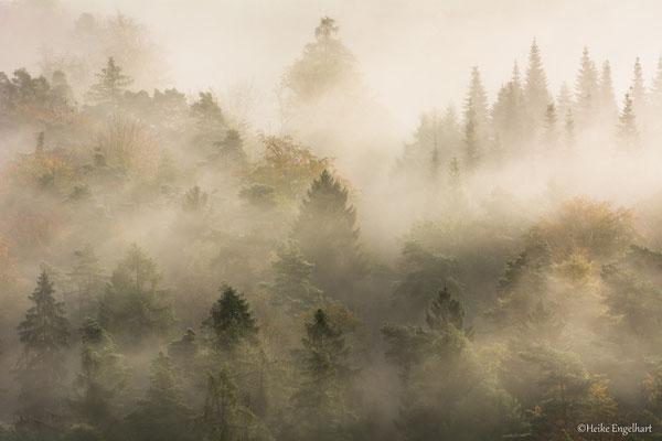Der Nebel offenbart tolle Details, Pfälzer Wald