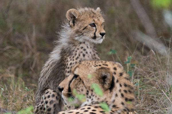 Die Jungtiere sind herrlich anzusehen mit ihrem flauschigen Fell.