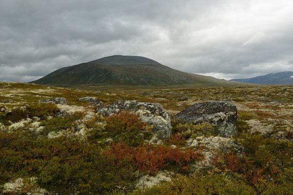 Dovrefjell Nationalpark: Moschusochsen, Rentierflechten, kleine Birken, Berge bis 2286m - alles da, was das Herz begehrt.