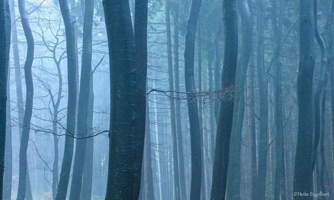 Mystische Stimmung in heimischen Wäldern
