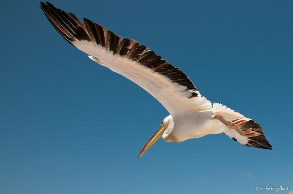 Pelikan, Namibia