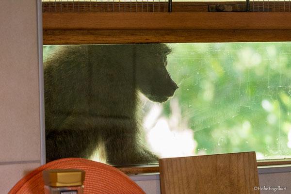 ...schauen auch mal zum Küchenfenster herein.