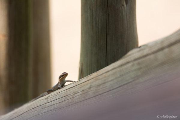 Wenn man nur lange genug auf der Terrasse sitzt, bekommt man schon etliche unterschiedliche Tiere zu sehen.