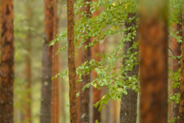 Walddetails.