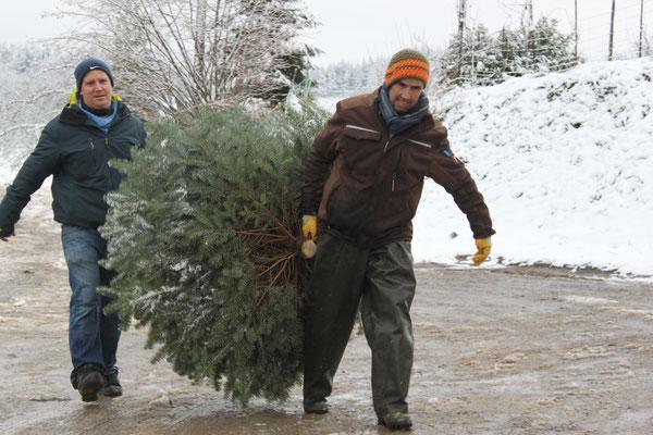 Verkauf Verkauf und Mithilfe, Weihnachtsbäume, Christbäume, Tannenbäume vom Schwarzwaldhof Hölzleberg, Josef Gmeiner in Durbach - https://www.hoelzleberg.de