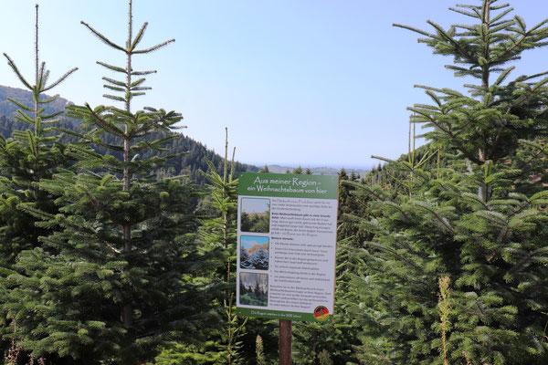 Informationstafeln Christbaumkulturen...