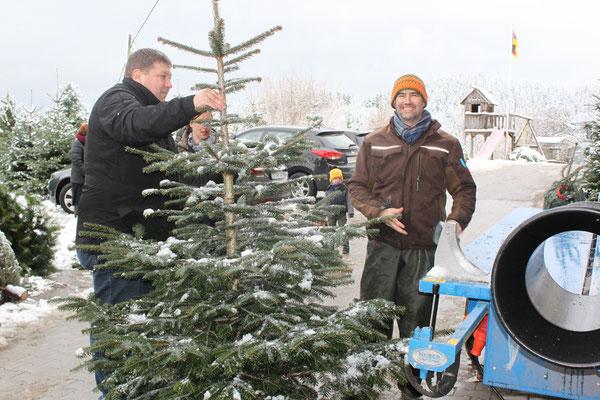 Verkauf  und Beratung, Weihnachtsbäume, Christbäume, Tannenbäume vom Schwarzwaldhof Hölzleberg, Josef Gmeiner in Durbach - https://www.hoelzleberg.de