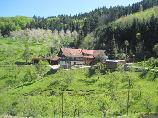 Herrmannswald