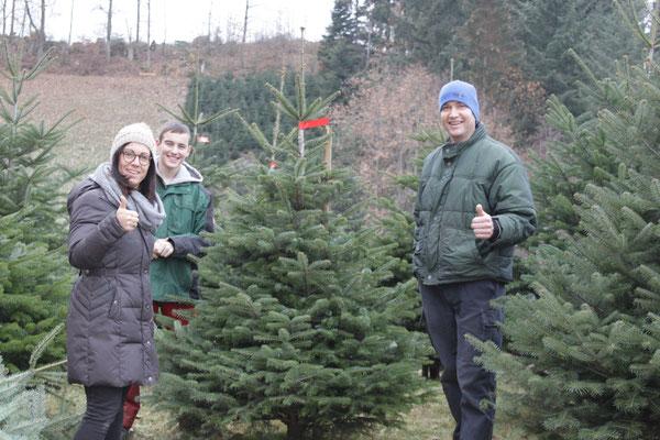 Verkauf der Weihnachtsbäume, Christbäume, Tannenbäume vom Schwarzwaldhof Hölzleberg, Josef Gmeiner in Durbach - https://www.hoelzleberg.de