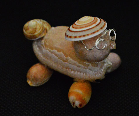Muschel Schildkröte