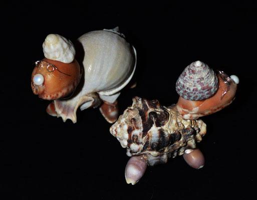 Muschel Schildkröten
