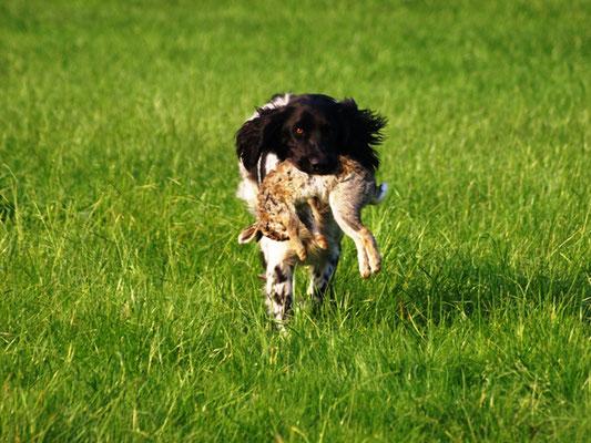 Alva kommt mit dem Kaninchen an (27.07.2012)