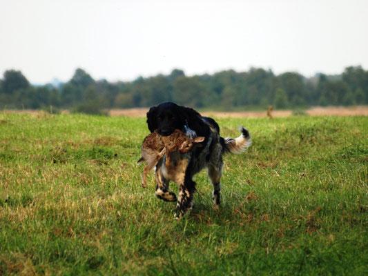 Alva kommt mit Beute zurück (27.07.2012)