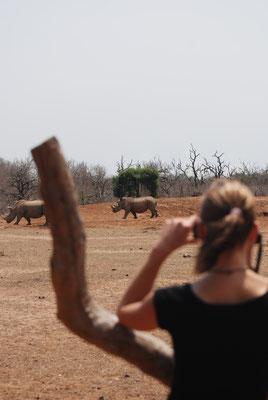 Hlane Nationalpark,Swasiland