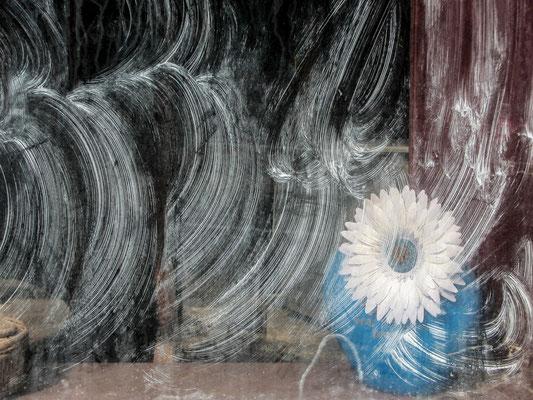 Window, 2010