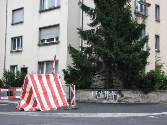 Zelt und Tanne, 2009