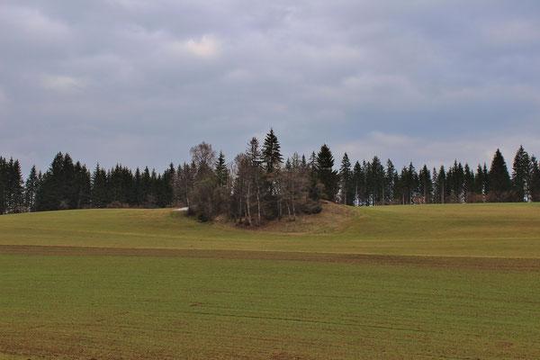 Dürnbergermoor, Österreich/Austria