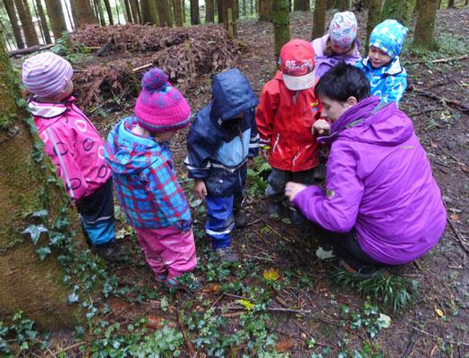 Wir suchen Pilze!