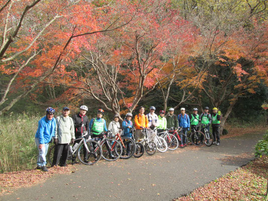 泉自然公園 蓮池の付近の紅葉